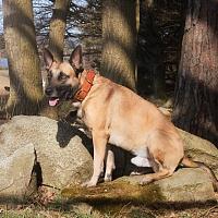 Obojek pro psy - Big dog