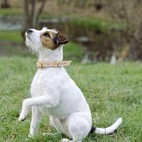 Obojek pro psy - Small dog