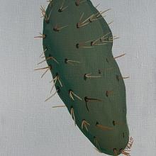 Levitující kaktus