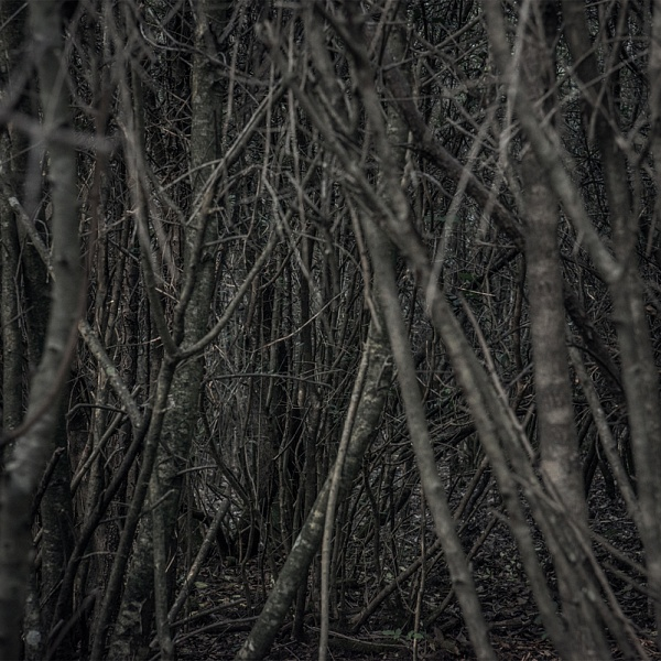 les 12 | Vladimíra Kotra