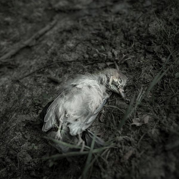 Les 10 | Vladimíra Židková