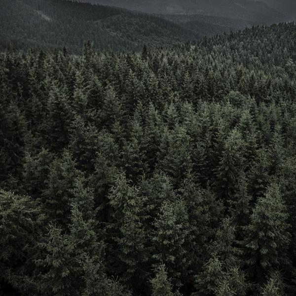 Les 9 | Vladimíra Židková