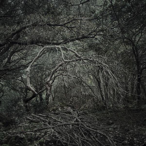 Les 1 | Vladimíra Židková